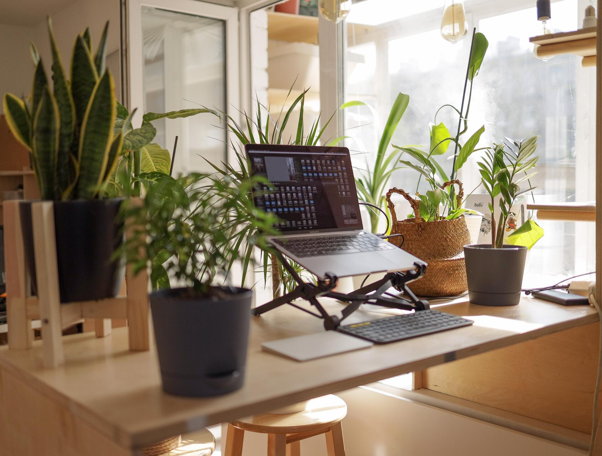 Remote working computer surrounded by plants
